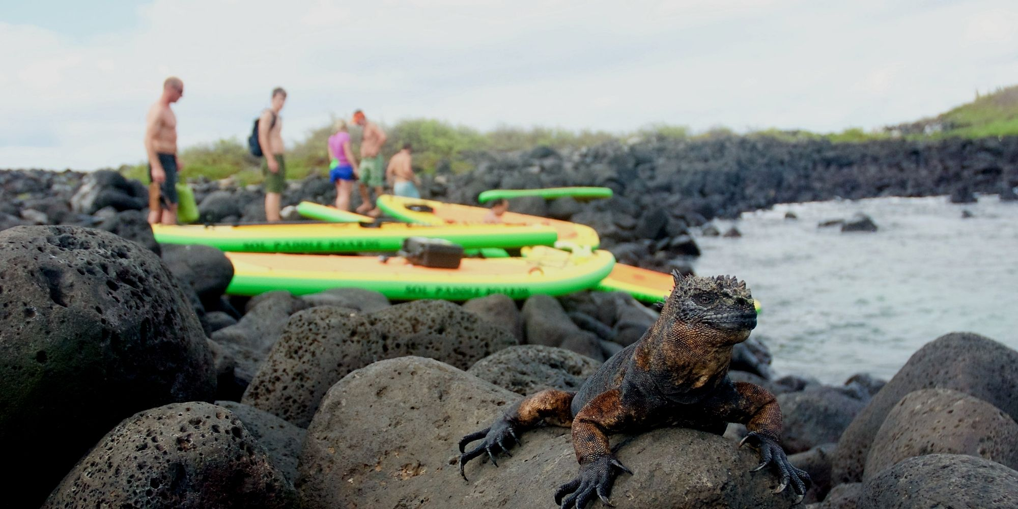 SUP Tour with Marine Iguana watching - Galapagos Islands