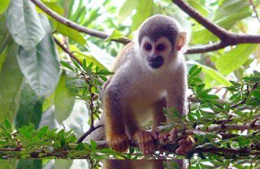 10-Day-4-Amazon-Wildlife-Kayak-Exploration-11