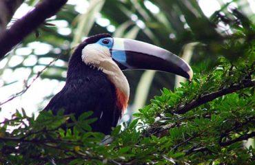 7-Day-3-Amazon-Wildlife-Kayak-Exploration