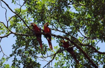 9-Epic-Treks-of-the-Andes-and-Amazon