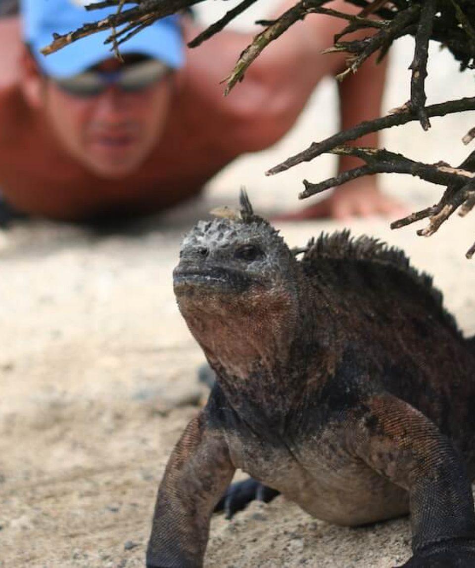 GPS93-Looking-at-Iguana-in-Tintoreras