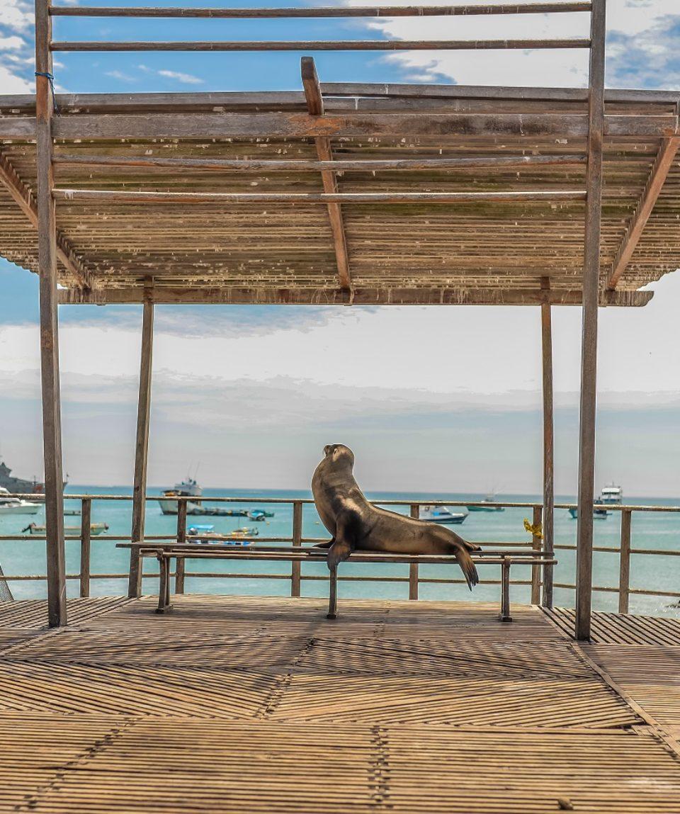 Galapagos Essential Multisport Adventure 5 Days (SHARED)