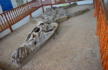 VL226 MTB Paleontological Museum